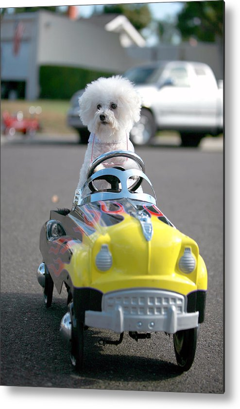 Alternative Energy Metal Print featuring the photograph Fifi Goes For A Ride by Michael Ledray