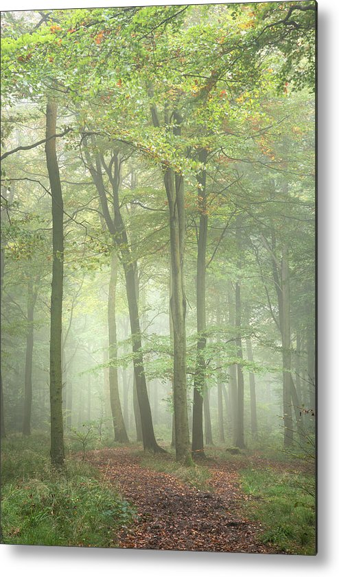 Landscape Metal Print featuring the photograph Stunning Colorful Vibrant Evocative Autumn Fall Foggy Forest Lan by Matthew Gibson