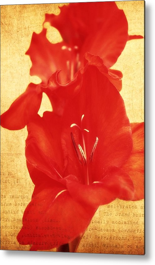 Gladiolas Metal Print featuring the photograph Gladiola by Cathie Tyler