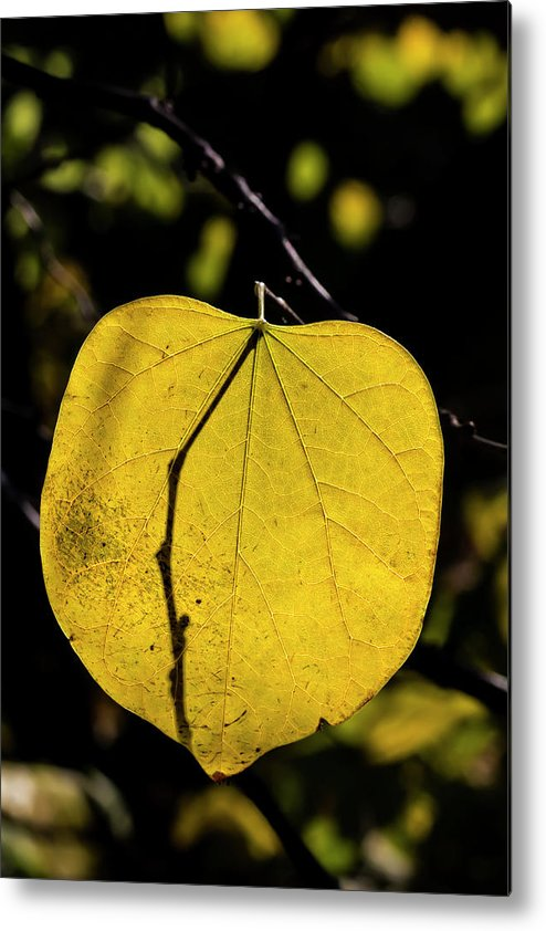 Fall Trees Metal Print featuring the photograph Fall Leaf by Robert Ullmann