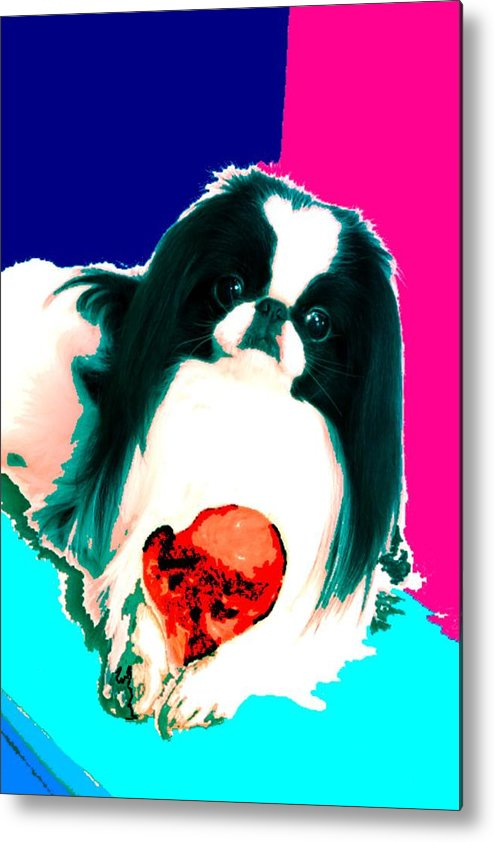 A Japanese Chin And His Toy Metal Print featuring the digital art A Japanese Chin And His Toy by Kathleen Sepulveda