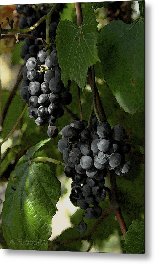 Grapes Metal Print featuring the photograph Almost Harvest Time by Michael Flood