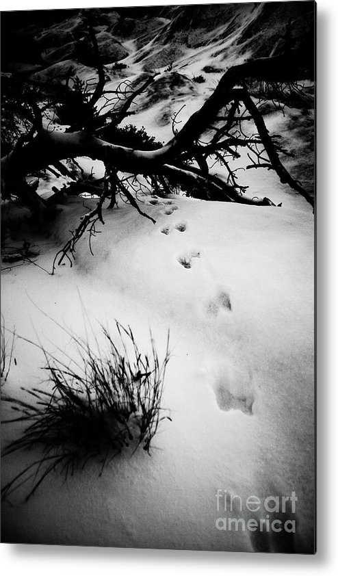 Animal Metal Print featuring the photograph Animal Tracks by Brenton Woodruff