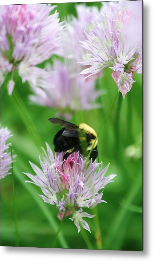 Bee Metal Print featuring the photograph Bee by Melanie Beasley