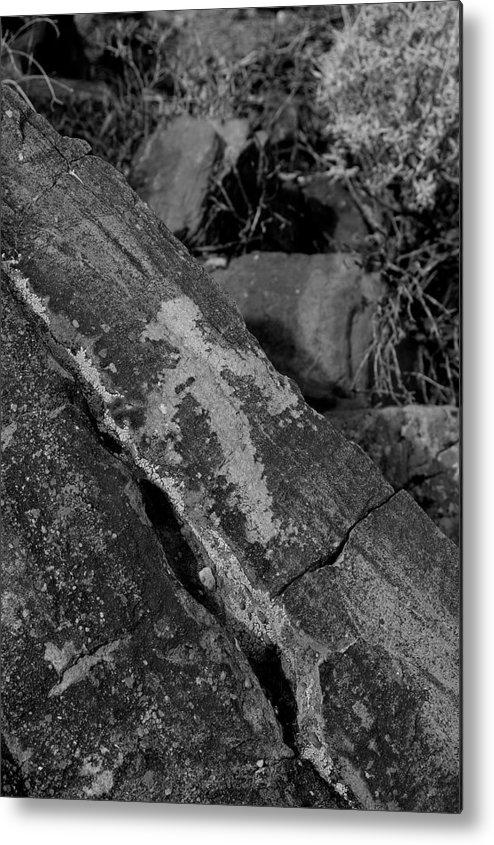 Arizona Desert Photography Metal Print featuring the photograph Bird by John Gee