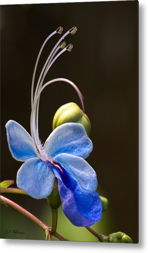 Flower Metal Print featuring the photograph Blooming Butterfly by Christopher Holmes