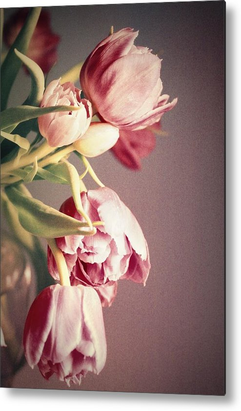 Tulips Metal Print featuring the photograph Bunch Of Beauties by Cathie Tyler