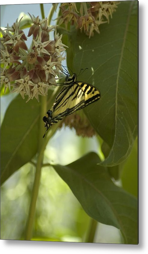 Flower Metal Print featuring the photograph Butterfly 1 by Sara Stevenson