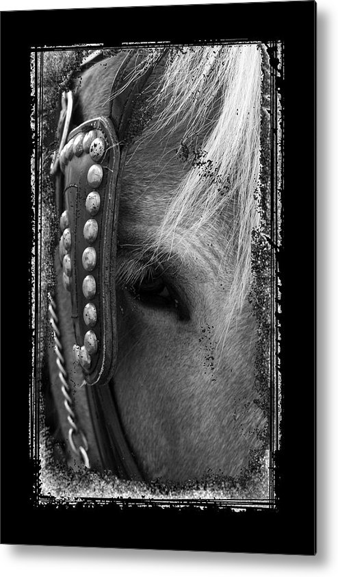 Horse Metal Print featuring the photograph Carriage Horse B And W by David Dunham