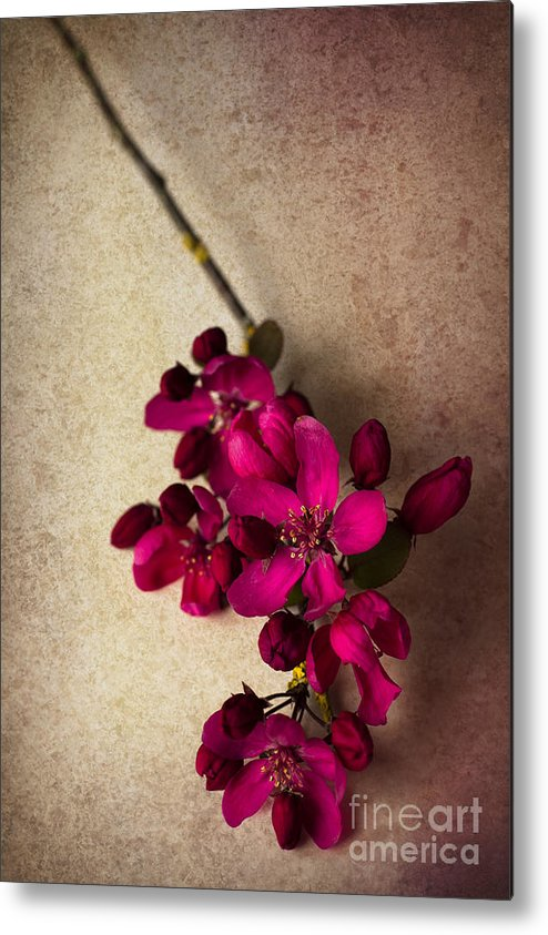 Cherry Blossom Metal Print featuring the photograph Cherry Pie by Jan Bickerton