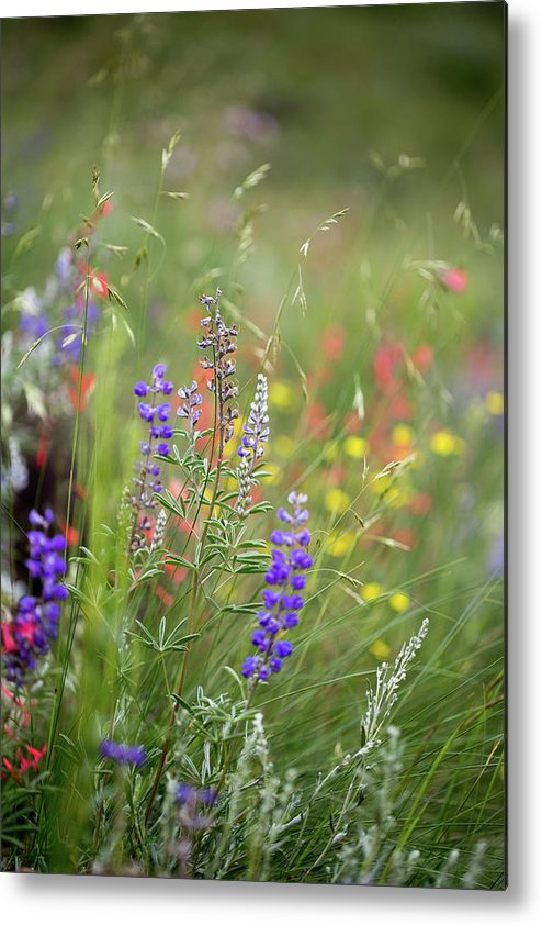 Crested Butte Metal Print featuring the photograph Colorful Colorado #2 by Meagan Watson
