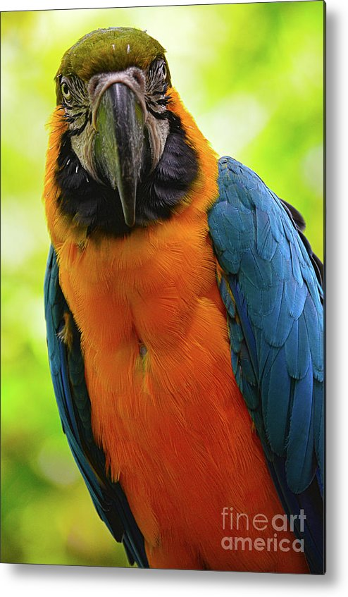 Birds Metal Print featuring the photograph Colorful Gaze by Spade Photo