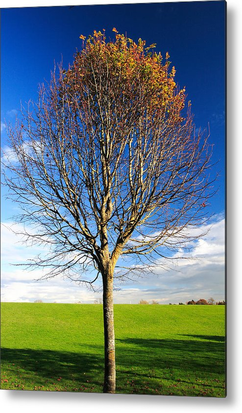 Tree Metal Print featuring the photograph Colorful Tree by Pierre Leclerc Photography