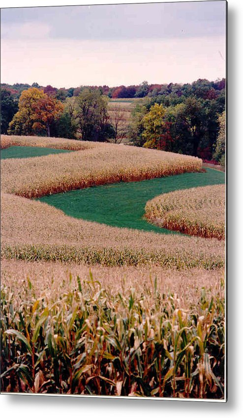 Photograph Metal Print featuring the photograph Corn Field by William Burgess