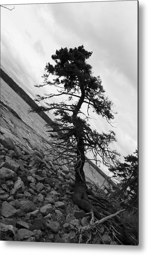 Tree Metal Print featuring the photograph Crooked by Becca Wilcox