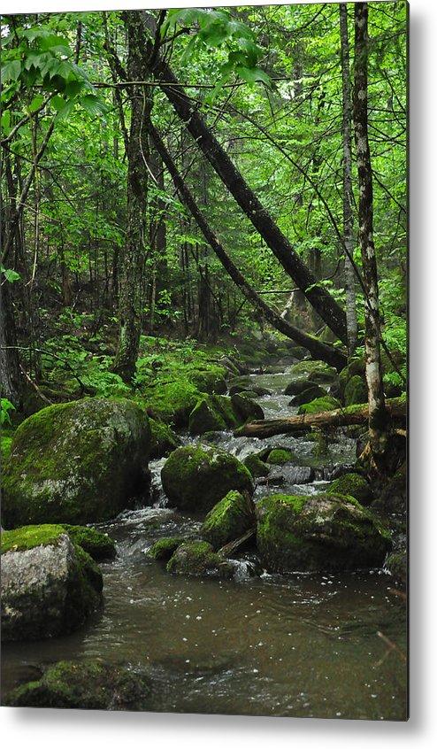 Stream Metal Print featuring the photograph Deep Woods Stream 3 by Glenn Gordon
