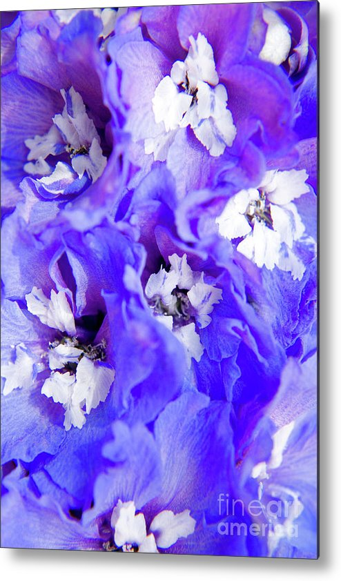 Nature Metal Print featuring the photograph Delphinium Flowers by Julia Hiebaum