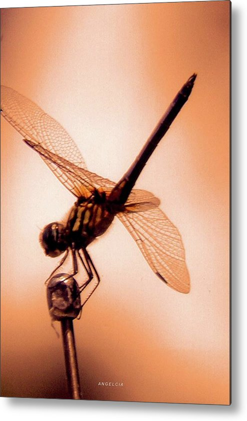Dragon Fly Metal Print featuring the photograph Dragon Fly by Angelcia Wright