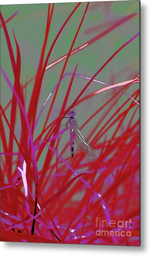 Dragonfly 5 Metal Print featuring the digital art Dragonfly 5 by Chris Taggart