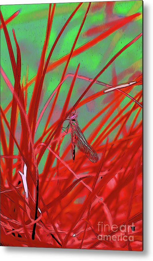Dragonfly 9 Metal Print featuring the digital art Dragonfly 9 by Chris Taggart