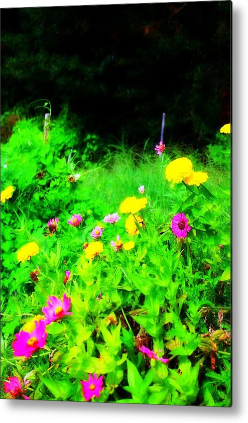 Flowers Metal Print featuring the photograph Dreamy by Jill Tennison