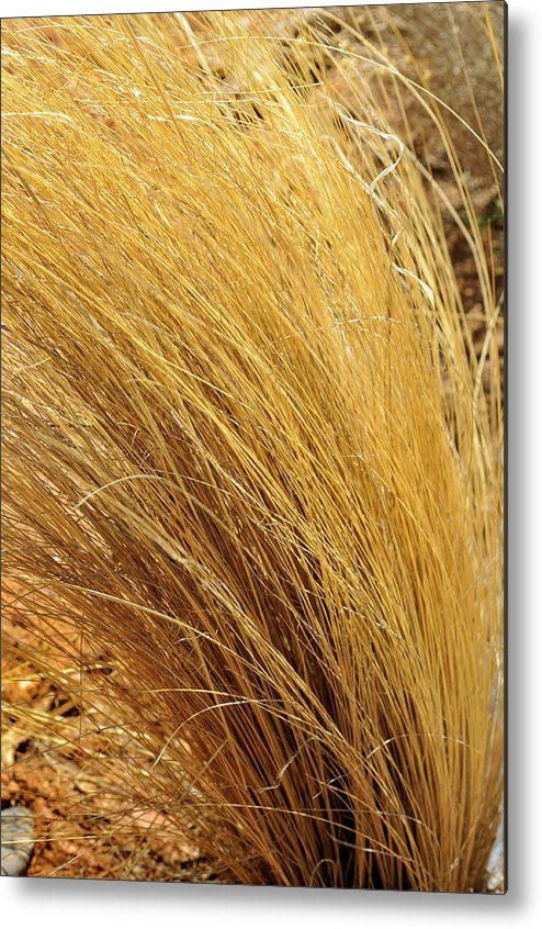 Landscape Metal Print featuring the photograph Dried Grass by Ron Cline