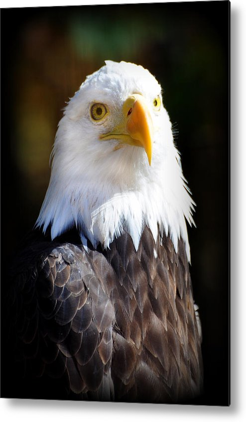 Eagle Metal Print featuring the photograph Eagle 14 by Marty Koch