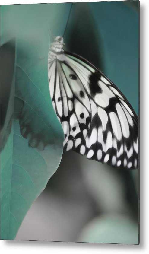 Metal Print featuring the photograph Enlightening by The Art Of Marilyn Ridoutt-Greene