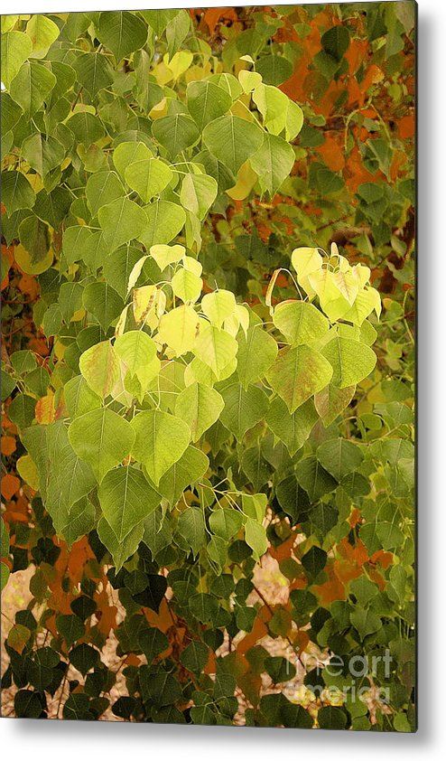 Fall Metal Print featuring the photograph Fall Leaves. by Viktor Savchenko