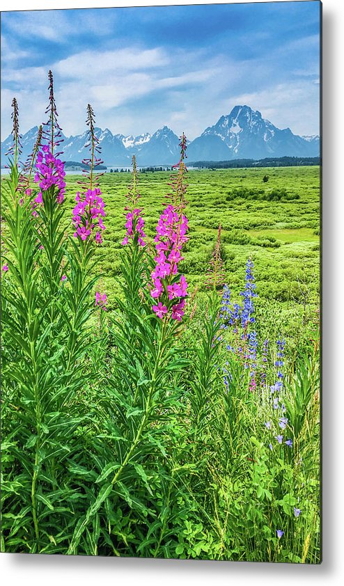 Grand Tetons Metal Print featuring the photograph Fireweed In The Foreground by Lisa Lemmons-Powers