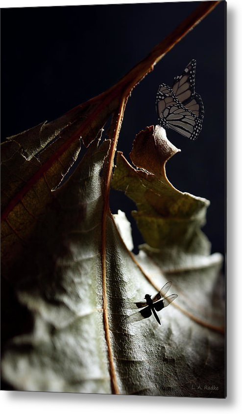 Lauren Radke Metal Print featuring the photograph First Light by Lauren Radke