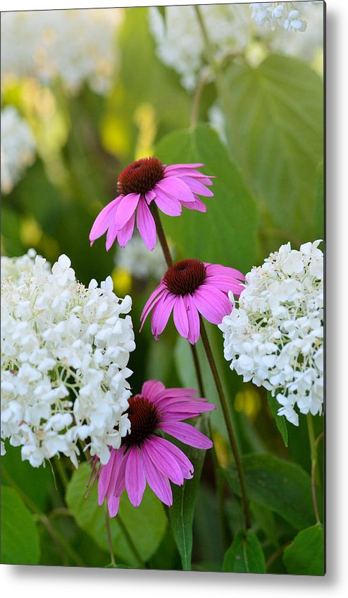 Garden Metal Print featuring the photograph Flowers That Contrast by Janet Rockburn