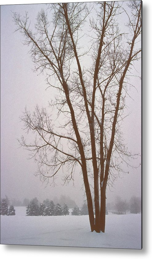Nature Metal Print featuring the photograph Foggy Morning Landscape 13 by Steve Ohlsen