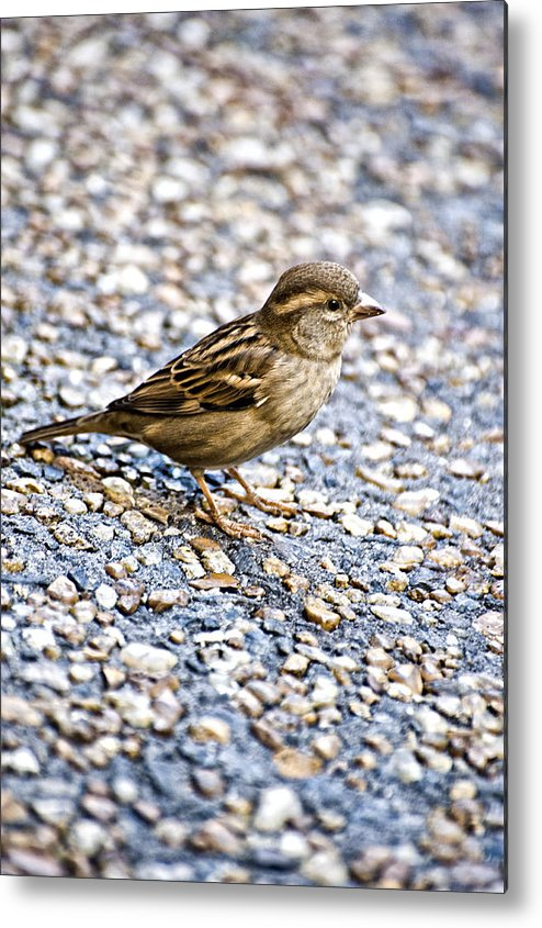 Bird Metal Print featuring the photograph Foraging by Sarita Rampersad