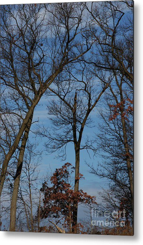 Woodland Metal Print featuring the photograph Framed In Oak - 1 by Linda Shafer