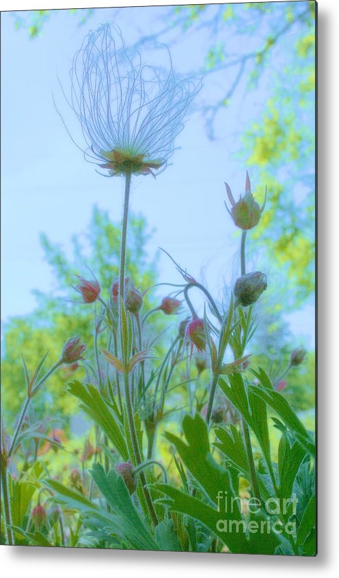 Flower Metal Print featuring the photograph Garden Crowd by Julie Lueders