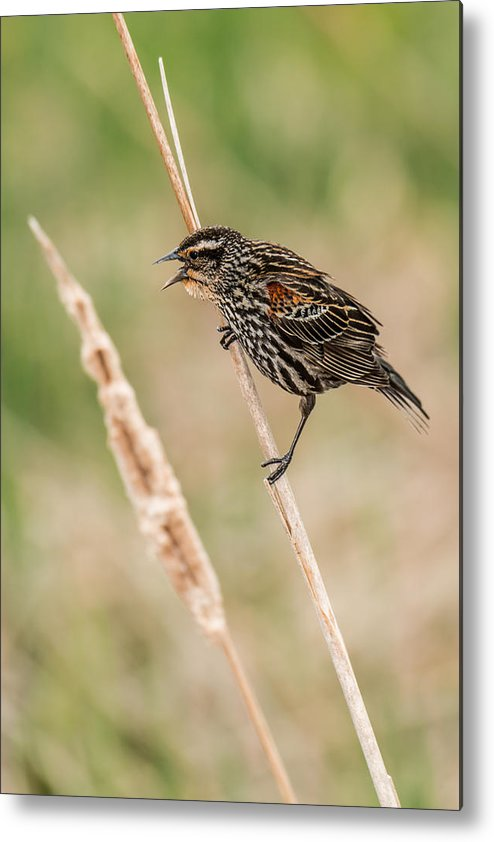 Bird Metal Print featuring the photograph Get Away From Here by John Crookes