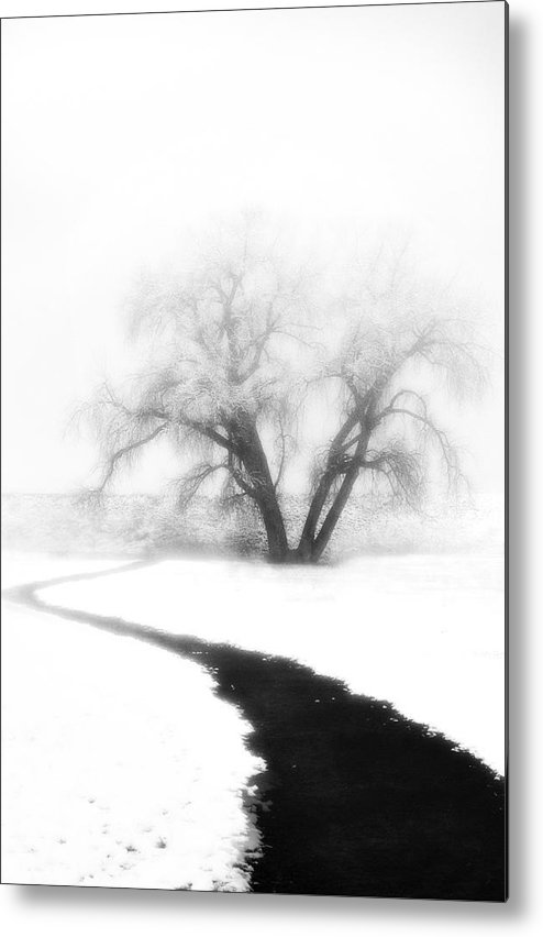 Tree Metal Print featuring the photograph Getting There by Marilyn Hunt