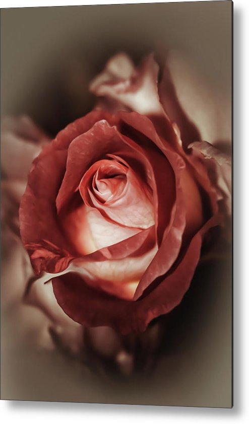 Larysa Koryakina Fine Art Photodraphy Metal Print featuring the photograph Glamorous Rose by Larysa Koryakina