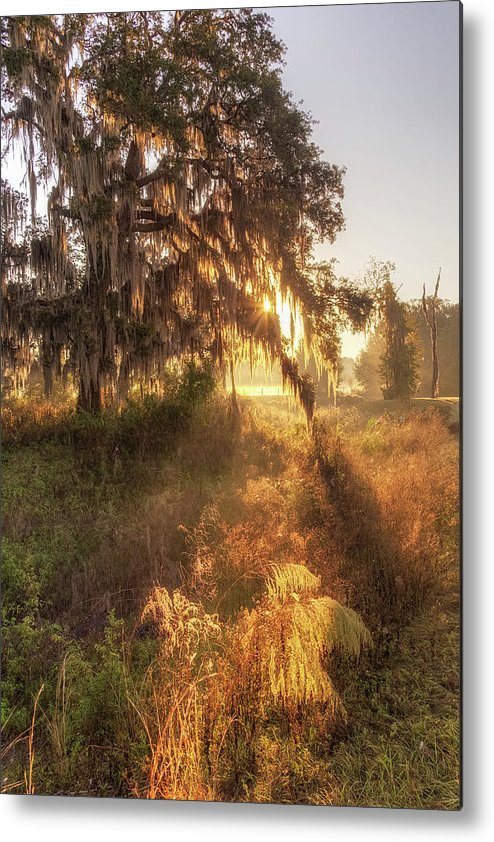 Sunrise Metal Print featuring the photograph Glorious Sunrise At The Oak Tree by Ronald Kotinsky