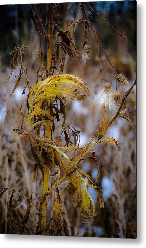Fall Landscape Photograph Metal Print featuring the photograph Golden End by Desmond Raymond