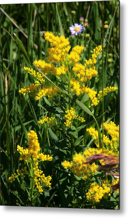 Wildflowers Metal Print featuring the photograph Golden October by Christine Till