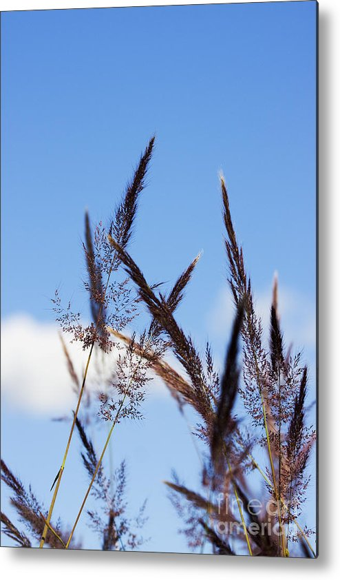 Blooming Metal Print featuring the photograph Grass Florets by Jorgo Photography - Wall Art Gallery