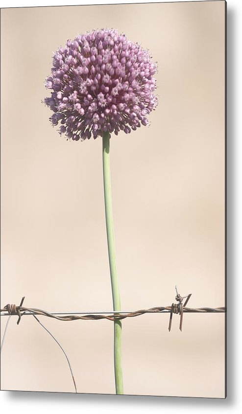 Photographer Metal Print featuring the photograph Grow Your Own Balls by Jez C Self