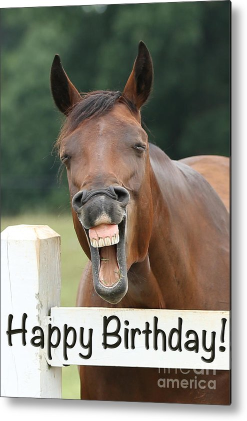 Happy Birthday Smiling Horse Metal Print by Jt PhotoDesign
