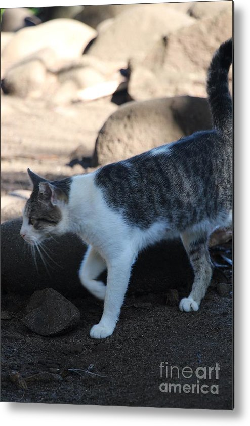 Kalalau Trail Metal Print featuring the photograph Hawaiian Feral Cat 2 by John Franke