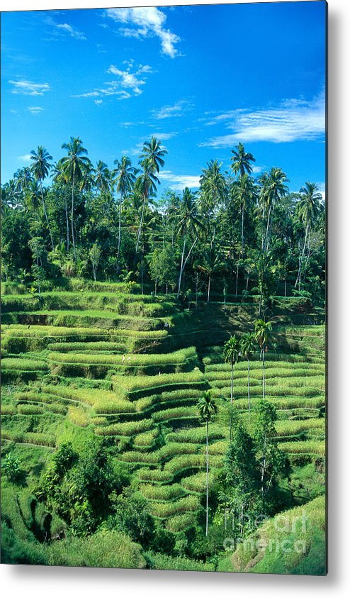Agriculture Metal Print featuring the photograph Hillside In Indonesia by Gloria & Richard Maschmeyer - Printscapes