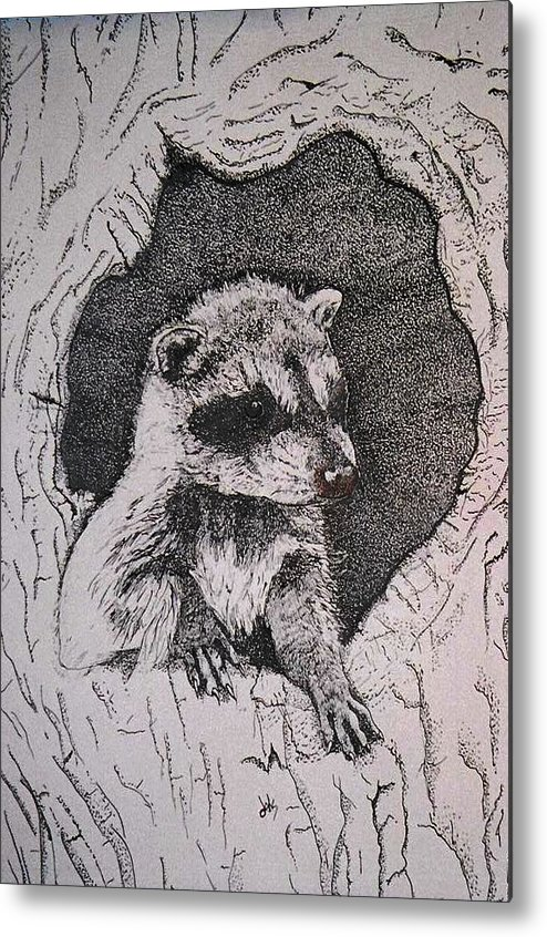 Raccoon Metal Print featuring the drawing Home by Debra Sandstrom