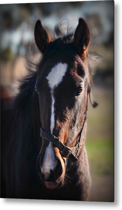 Horse Metal Print featuring the photograph Horse Whispering by Georgiana Romanovna