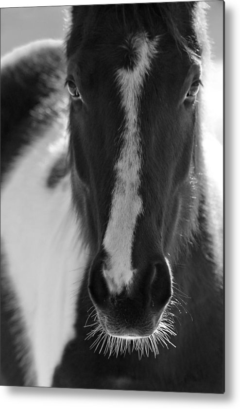 Horse Metal Print featuring the photograph iContact by Evelina Kremsdorf